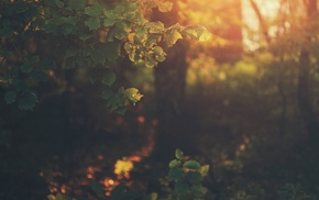 nature, plants, bokeh, sunlight, leaves