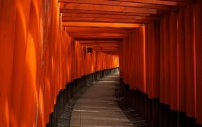 orange fruit, torii, temple, path, Kyoto, Japan