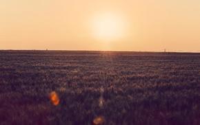 clear sky, photography, farm, power lines, sunset, lens flare
