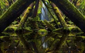 photo manipulation, plants, reflection, nature, algae, trees