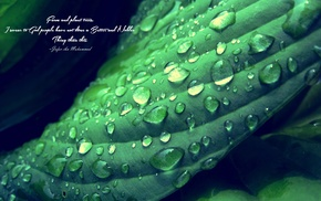 green, depth of field, quote, Islam, leaves, Imam