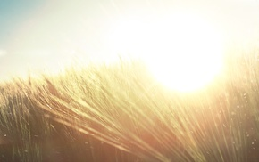 bright, nature, sunlight, macro, plants, grass