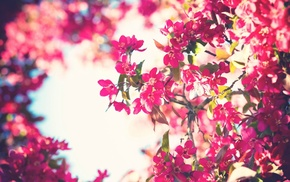 pink flowers, sky, bokeh, trees, flowers, filter
