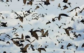 depth of field, animals, sky, bats