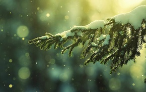 snow flakes, snow, winter, depth of field, trees