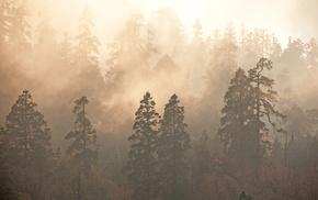 trees, nature, forest, mist, landscape