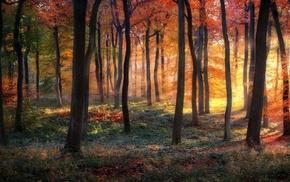 landscape, fall, forest, sun rays, grass, mist