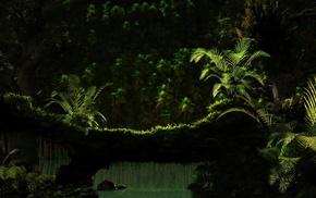 forest, ferns, landscape, nature, sunlight