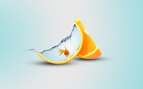 fish, orange fruit, water, orange