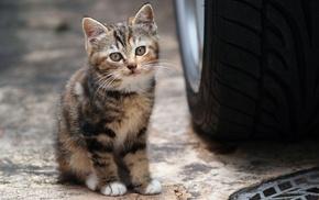 car, animals, tires, cat, kittens
