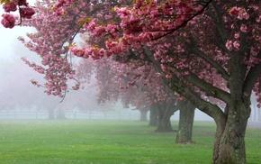 landscape, spring, Blossom, sunrise, green, cherry trees