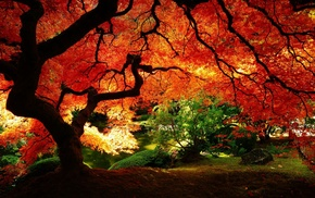 red leaves, red, nature