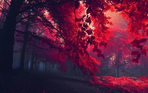 red leaves, red, nature, mist