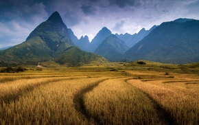 Vietnam, mountain, forest, spikelets, field, hill