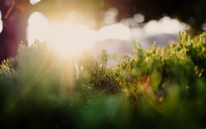 photography, grass, sun rays, plants