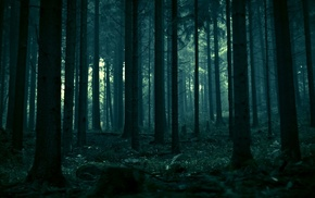 landscape, dark, nature, trees, dead trees, pine trees