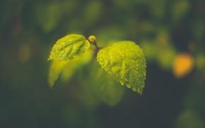 macro, rain, leaves, blurred, water drops, photography