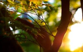 bokeh, photography, macro, blurred, leaves, sunlight