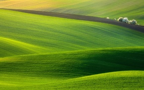 field, nature, photography, hill, green, trees