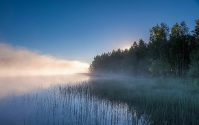 nature, Russia, trees, mist, water, reeds
