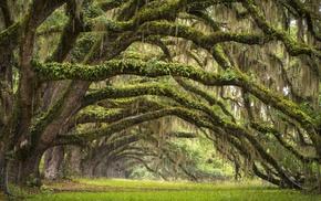 South Carolina, grass, nature, landscape, leaves, forest
