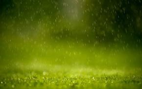 rain, green, grass