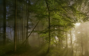 sunrise, sun rays, nature, forest, spring, mist