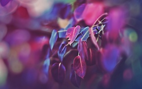photography, macro, purple, leaves, pink, blurred