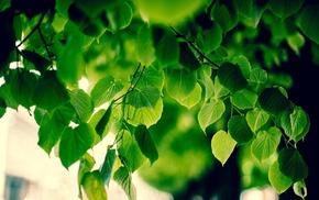 branch, blurred, sunlight, macro, foliage, nature