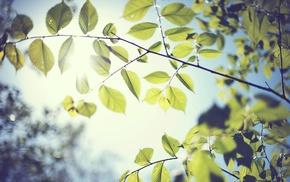 leaves, foliage, branch, macro, blurred, trees