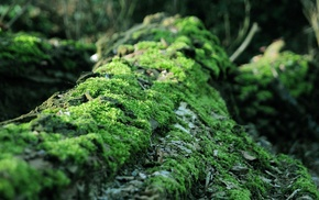 forest, blurred, nature, life, moss, dead trees