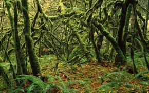 dead trees, rain, forest, moss