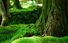 trees, forest, nature, green, bokeh, moss