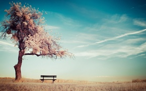 sky, ground, bench, trees, alone