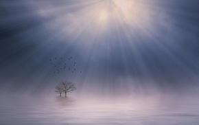 mist, sunrise, morning, landscape, birds, calm