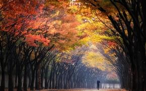 trees, morning, landscape, mist, nature, sunbeams