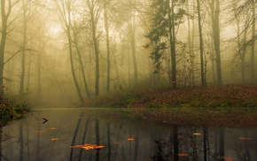 leaves, fall, landscape, water, mist, nature