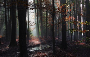 sun rays, nature, landscape, path, mist, forest