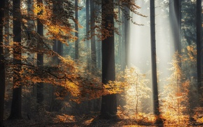 landscape, sun rays, sunlight, trees, mist, leaves