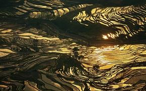 water, rice paddy, landscape, China, gold, sunlight