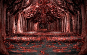 forest, landscape, nature, photo manipulation, path, red