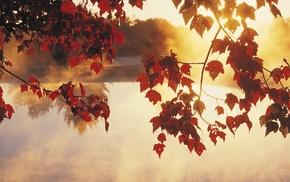 sunlight, lake, leaves, calm