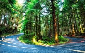 plants, light trails, moss, Oregon, colorful, USA