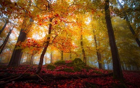 landscape, nature, fall, sunlight, trees, mist