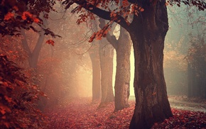 fall, trees, mist, nature, forest, leaves