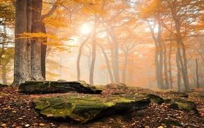 mist, moss, landscape, leaves, fall, nature