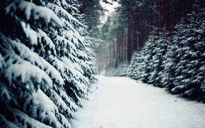 forest, snow, trees, winter