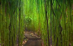 garden, bamboo, Japanese Garden