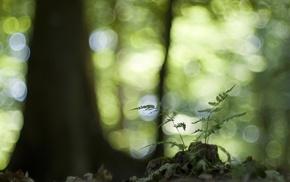 nature, forest, macro, bokeh