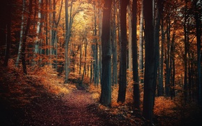 trees, shrubs, leaves, sunlight, path, nature